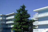 Urlaub Reisen  Italien Venetien Bibione Appartementhaus Residence Valbella