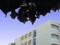 Urlaub Reisen  Griechenland Kreta Chania Hotel Kriti