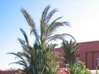 Urlaub Reisen  Spanien Kanaren Corralejo Appartements Oasis Papagayo