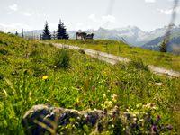 Urlaub Reisen  Österreich Vorarlberg St. Gallenkirch