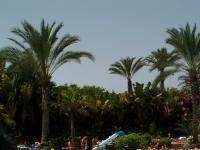 Urlaub Reisen  Spanien Kanaren Playa del Inglés Hotel IFA Buenaventura