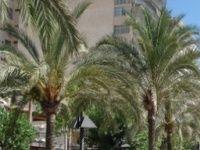 Urlaub Reisen  Spanien Balearen El Arenal Hotel Solimar