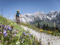 Urlaub Reisen  Österreich Salzburger Land Eben im Pongau